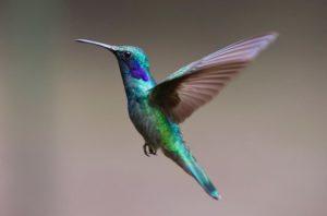 Hummingbird. Algoritmos de Google