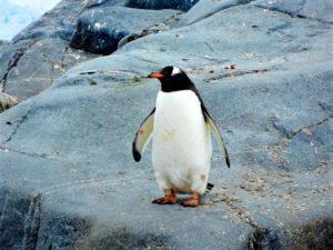 Penguin. Algoritmos de Google
